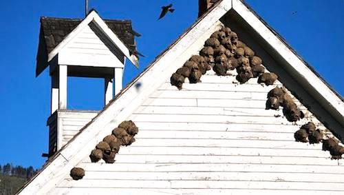 mud nests